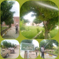 عملیات سم پاشی درختان سطح شهر آغاز شد .