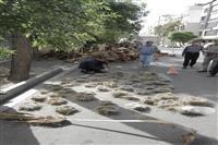 هرس بی موقع درختان در خیابان اردیبهشت شیراز، با دخالت نیروهای اداره کل حفاظت محیط زیست فارس متوقف شد