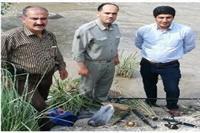 دستگیری متخلفین شکار و صید درساری و آمل