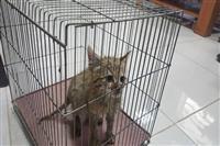 نجات گربه وحشی نابالغ از مرگ در فیروزآباد فارس