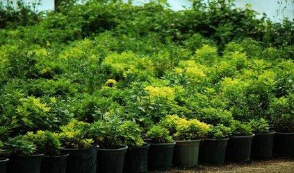 کاشت ۸۵۰ هزار بوتهگل در سطح منطقه از ابتدای سال