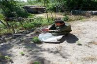 رها سازی سه بهله جغد انبار در شهرستان لنگرود