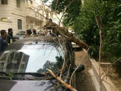تشکیل کمیته ای به منظور شناسایی درختان پوسیده سطح شهر