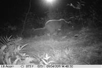 تصویربرداری از یک قلاده خرس قهوه ای به همراه دو توله اش  در مناطق حفاظت شده شهرستان شفت