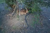 تولد مرال ماده در پارک طبیعت گردی لوندویل آستارا