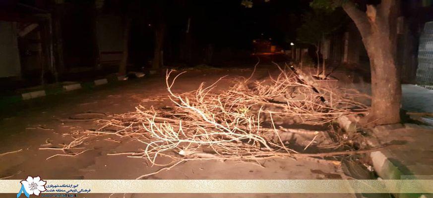 هرس تابستانه درختان محدوده منطقه ۸ تبریز