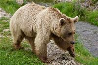 شناسایی شکارچی خرس در نکا با همکاری دوستداران محیط زیست