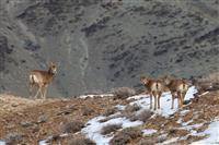 بهره گیری از حیات وحش برای گردشگری/ حیوانات استان کم نظیرند