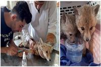 حیات وحش در چهارمحال و بختیاری درمان و به طبیعت بازگشتند