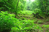 چرایی ثبت جهانی جنگل های هیر کانی