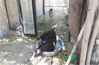 عامل زنده گیری پرندگان شکاری در شهرستان جیرفت کرمان دستگیر شد.
