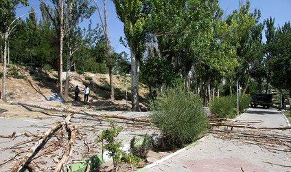 حذف چند اصله درخت خشک و خطرزا در مجموعه ائل گلی