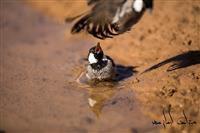 تعداد ۳۲۸ قطعه پرنده وحشی از متخلفان شکار و صید پرنده، کشف و ضبط شد