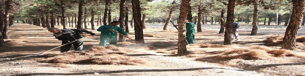پس از آتش سوزی اخیر صورت گرفت: حرکت جهادی شهرداری بیرجند در پاکسازی پارک جنگلی