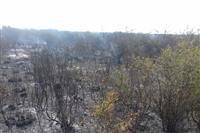 با اقدام به موقع نیروهای یگان حفاظت محیط زیست شهرستان بهشهر؛آتش سوزی پناهگاه حیات وحش میانکاله بطور کامل مهار شد.