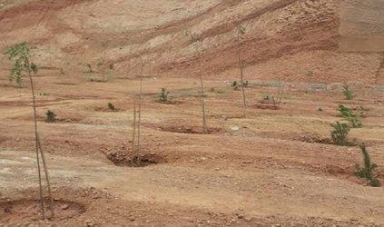 کاشت انبوه درخت در کوی ولی امر با۲۰۰۰ مترمربع مساحت