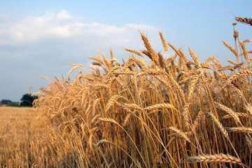 سازمان هواشناسی توصیههای کشاورزی چهل و هشتمین هفته سال زراعی را اعلام کرد