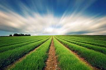 سازمان هواشناسی توصیههای کشاورزی پنجاهمین هفته سال زراعی را اعلام کرد