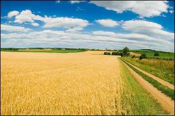 سازمان هواشناسی توصیههای کشاورزی پنجاه و دومین هفته سال زراعی را اعلام کرد