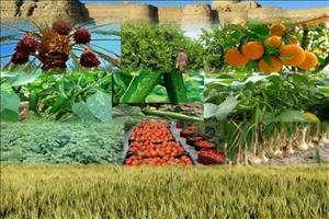 ضریب نفوذ بیمه کشاورزی در خوزستان به ۶۷ درصد رسید