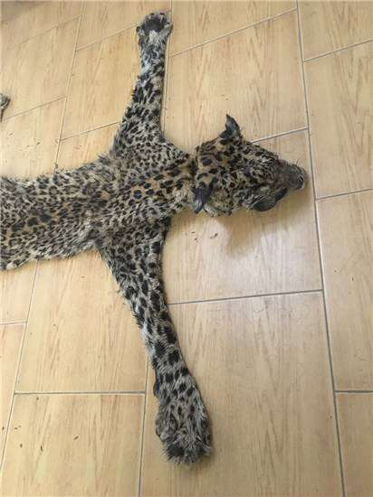 شکارچی توله پلنگ در خراسان شمالی دستگیر شد