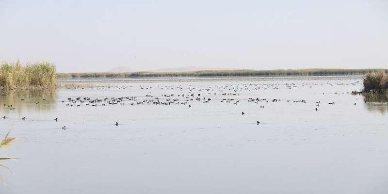 تالاب «کانیبرازان» مهاباد مهمترین سایت پرندگان زمستانگذران ایران است