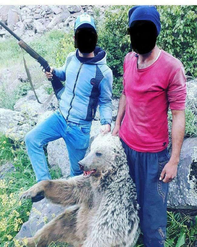 عاملین انتشار عکس کشتار خرس در ماکو شناسایی شدند