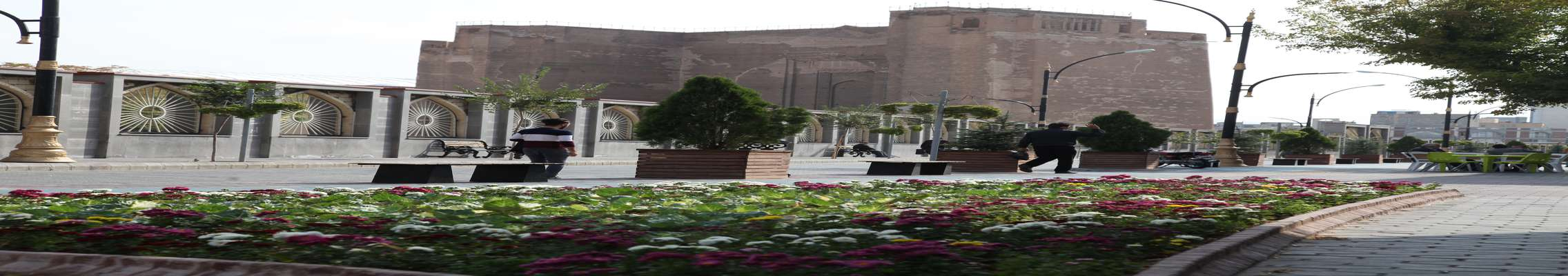 جلوهگری زیبای گلهای داوودی در منطقه تاریخی فرهنگی تبریز