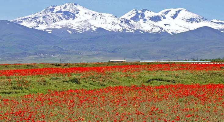 گونههای گیاهی و جانوری کوهستان سبلان حفاظت میشوند