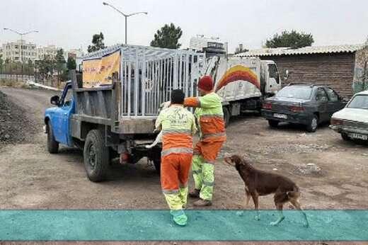 اجرای طرح جمع آوری سگ های بلاصاحب در سطح منطقه۷تبریز