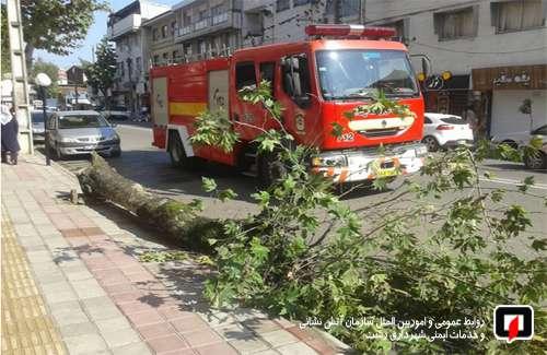 سقوط  یک اصله درخت در خیابان فلسطین رشت/ آتش نشانی رشت