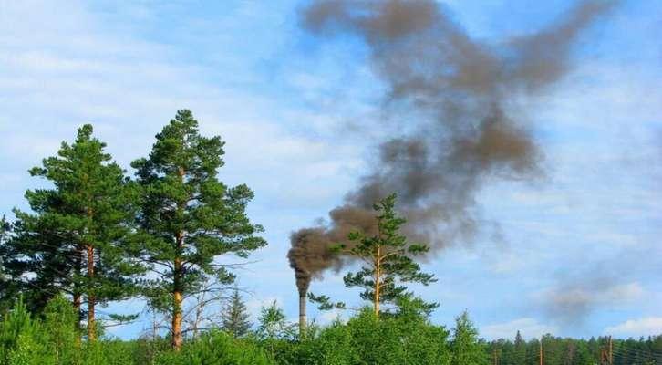 راهكارهاي طبيعي بهتر از فناوريهاي نوين آلودگي هوا را كاهش ميدهد