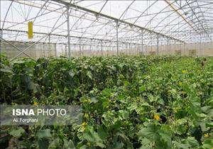 تخصیص سوخت یارانهای به گلخانهداران