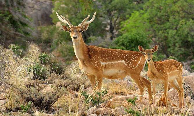 سرشماری پاییزه گونههای پستانداران پارک ملی دریاچه ارومیه آغاز شد