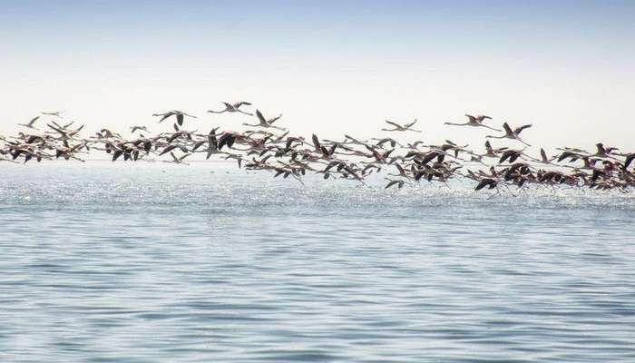 پرندگان مهاجر مشکوک به آنفلوآنزای مرغی درقم پایش میشوند