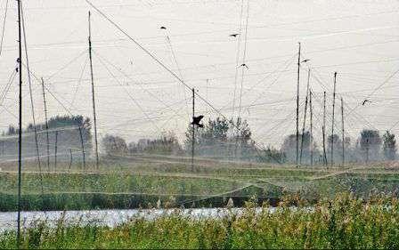 تمامی دامهای هوایی پرندگان در فریدونکنار جمعآوری میشود