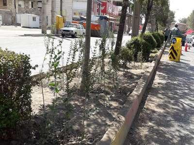 عملیات واکاری در بستر فضای سبز 12 معبر شهر اجرا شد