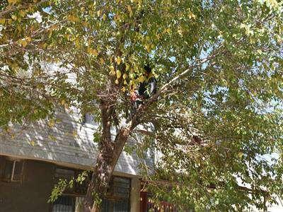 هرس درختان در شرايط ويژه و با دستورالعملهاي خاصي که براي هر نوع درخت وجود دارد انجام ميشود و شهروندان نگران ميزان هرس درختان نباشند