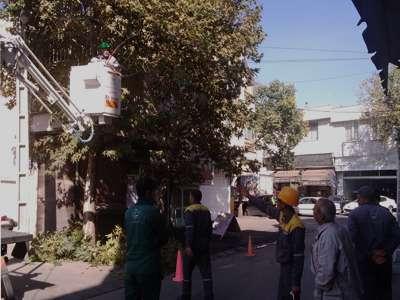 عملیات پیرایش و ایمن سازی درختان در دستور کاری سازمان فضای سبز شهرداری قزوین قرار دارد