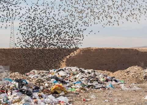 وجود زبالههای زیاد باعث ایجاد بحران پسماند در استانهای شمالی کشور