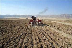 کشت دیم در ۱۵ هزار هکتار از زمینهای کشاورزی دزفول آغاز شد
