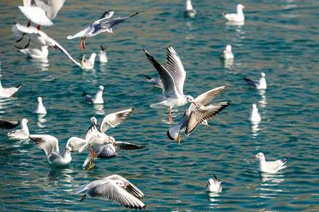 حوزههای آبی اسدآباد میزبان بیش از ۱۰۰۰ قطعه پرنده مهاجر