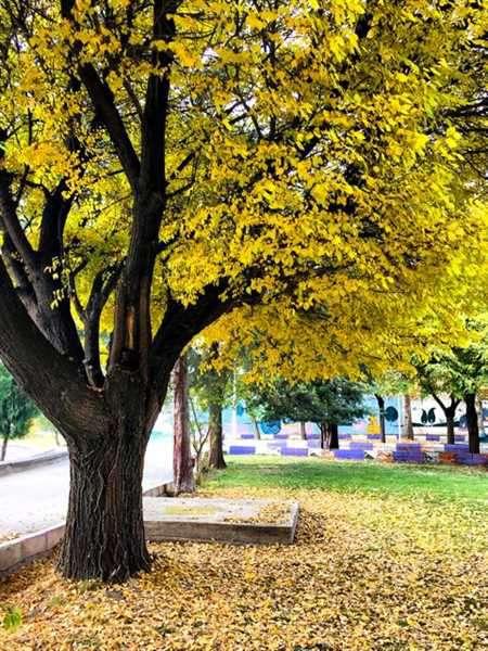 فضای پاییزی در مجموعه فرهنگی ورزشی بانوان شهرداری خوی