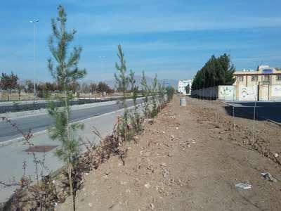 حاشیه بلوار امام علی(ع) تحت پوشش فضای سبز قرار گرفت