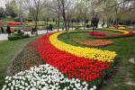 کاشت حدود ۳۶۰ هزار پیاز گل لاله در سطح شهر