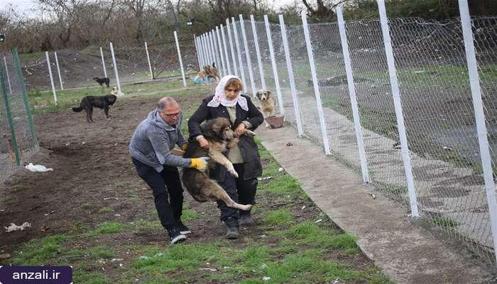 رها سازی اولین قلاده های پلاک گذاری شده از پناهگاه سگ های بلاصاحب