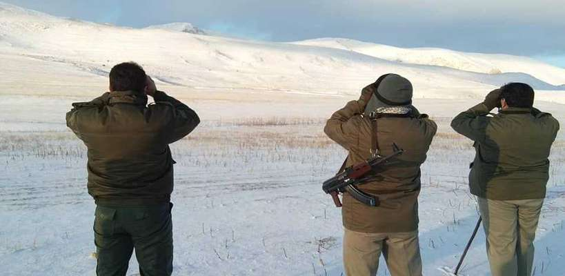 آغاز سرشماری حیات وحش در استان اردبیل