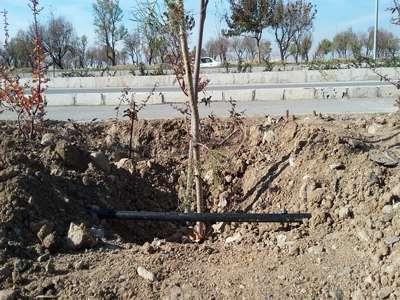سیستم آبیاری قطره ای فضای سبز بلوار امام علی(ع) توسعه یافت
