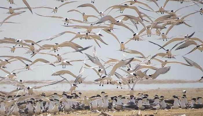 دریافت مجوز برای گردشگری در مناطق حفاظت شده الزامی است