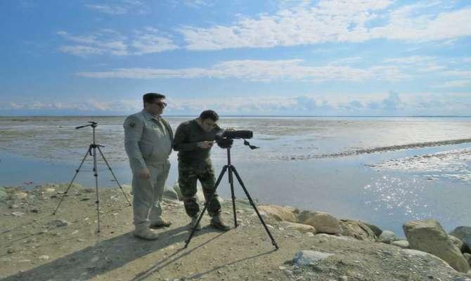 اجرای برنامه عمل حفاظت ملی غاز پیشانی سفید کوچک در گلستان